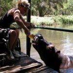 8-hippo