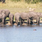 elephant-(2)