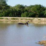 hippo-(2)
